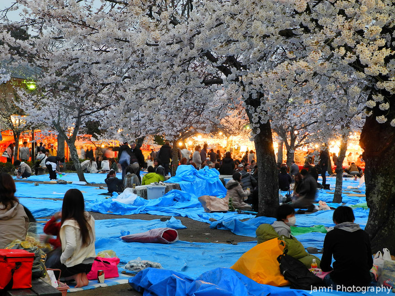 Under the Sakuras.<br /> People having Hanami (blossom viewing) parties.<br /> At Maruyama park, Gion, Kyoto.