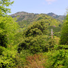 Mount Atago through the Trees.<br /> As we neared the starting point for our ascent.