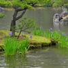 Irises in the Pond.<br /> At Kinkaku-ji Temple, Kyoto.
