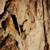Up Close to a Paperbark Tree