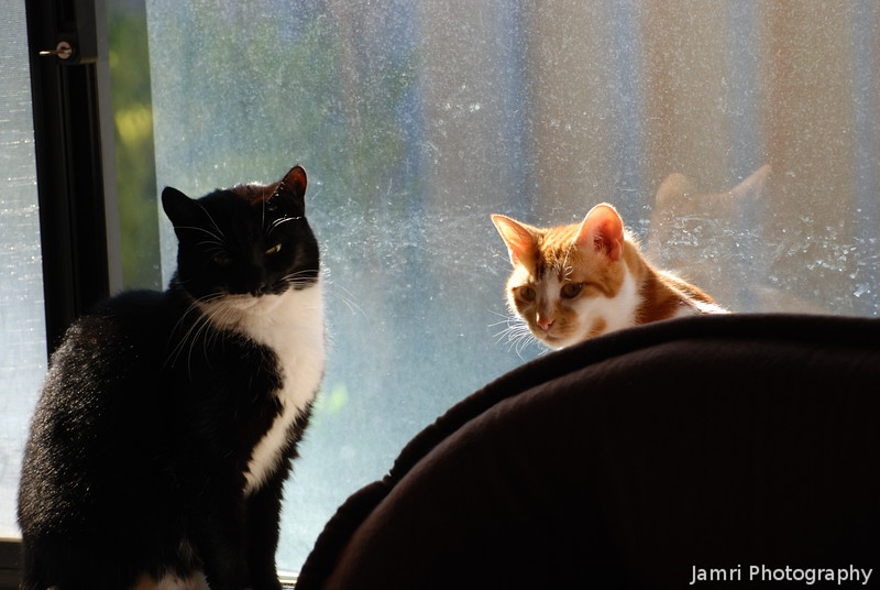 Linus and Lucy by the Window