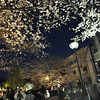 Capturing the Sakura.<br /> BTW I've been away for a while... I'm back now 8).