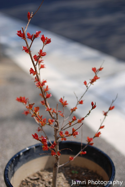 """New Leaves on the Plant.<br /> This plant that Bob Walker bought last June has started to sprout new leaves after being dormant for about 5 months. Click on the Key Word """"bobsplant"""" to see other photos from different seasons."""