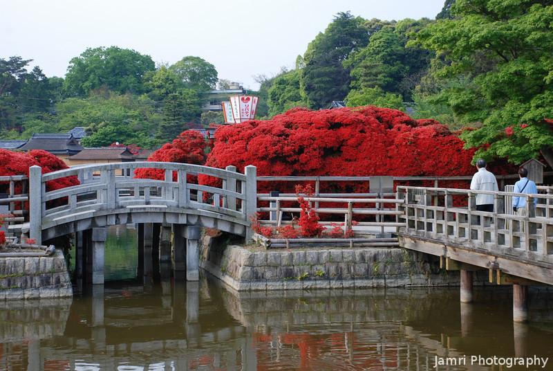Azaleas and Bridge.