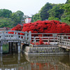 Azaleas and Bridge.