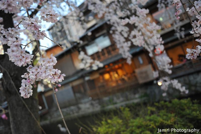 Blossoms and Buildings.<br /> In Shirakawa, Gion, Kyoto.