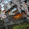 Blossoms and Buildings.<br /> In Shirakawa, Gion, Kyoto.