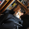 Very Naughty Lucy.<br /> Sitting and sleeping in my travel bag. It was a task and a half cleaning all the cat hair out of it. But she's so cute!