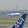 Behind the tail.<br /> Another ANA Airbus A320 lands framed by the tail of an ANA aircraft at the gates.