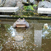 At the wishing pond.<br /> In Tenryu-ri (a Buddhist Temple) Arashiyama, Kyoto.