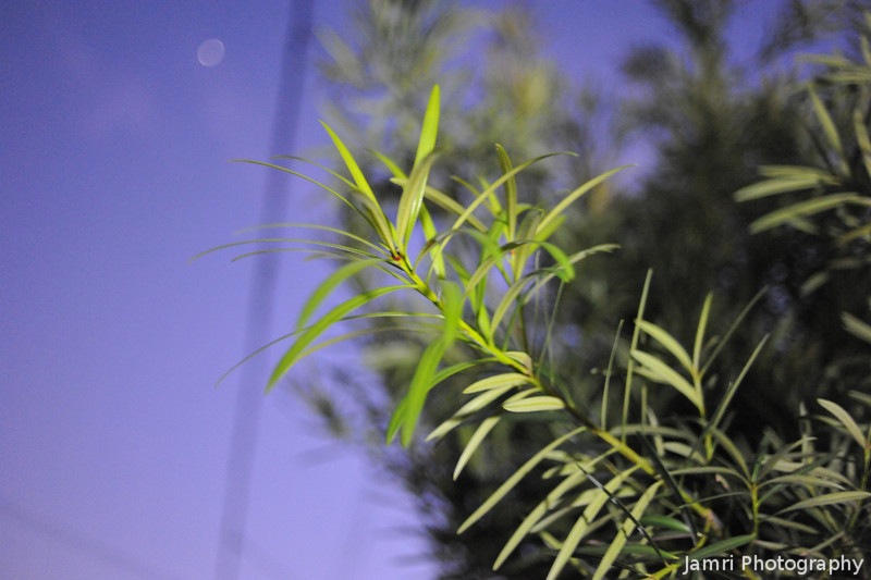A Plant at Night.<br /> Playing around with High ISO shooting again 8).
