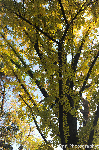 Getting closer to the Ginkgo.