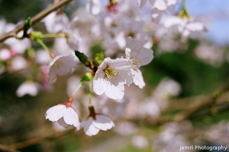 Colourful Spring.<br /> Note Film Shot: Nikon F80 + Nikkor 35 f/2 + Fujicolor Reala ACE 100