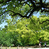 Relaxing in the Kyoto Imperial Palace Park.<br /> While we awaited the translation of our drivers licenses.