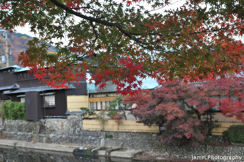 Traditional Restaurants, through a maple tree.