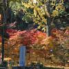 Covered in Autumn Colour.<br /> A little hill at Nagaoka Tenmangu Shrine, in Nagaokakyo.