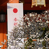 Ume in Front of the Shrine, Nagaoka Tenmangu Shrine, Nagaokakyo.