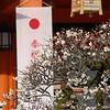 Ume in Front of the Shrine, Nagaoka Tenmangu Shrine, Nagaokakyo.
