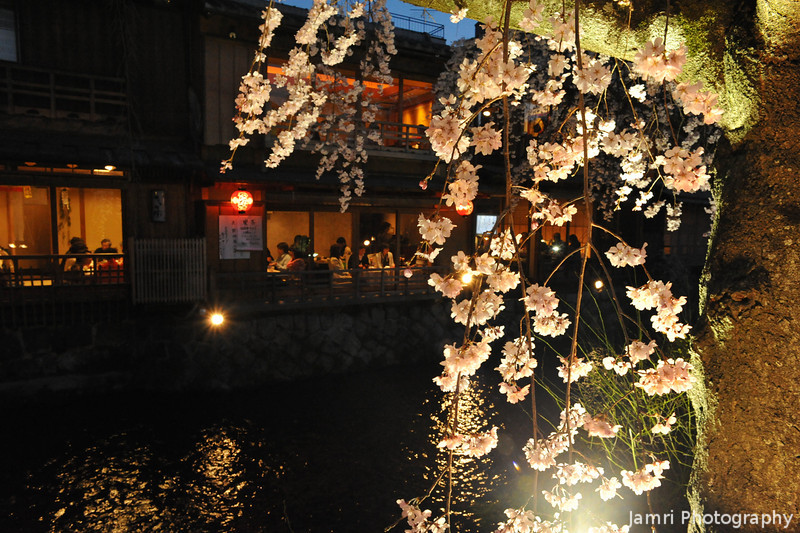 A lower view of the Sakura.