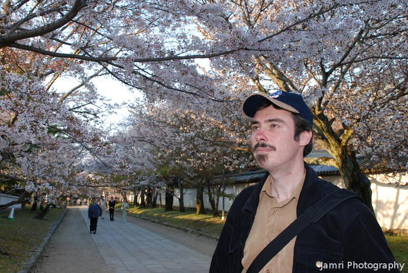 """""""Hanami"""" James.<br /> """"Hanami"""" means Sakura watching.<br /> Photo by Ritsuko."""