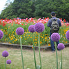 Photographing the Flowers.<br /> At the Kyoto Botanical Gardens.<br /> Note: Circular Polarising Filter Used.