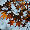 Waning Autumn.<br /> Winter is almost here.