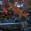 Stone Bridge and Maples.