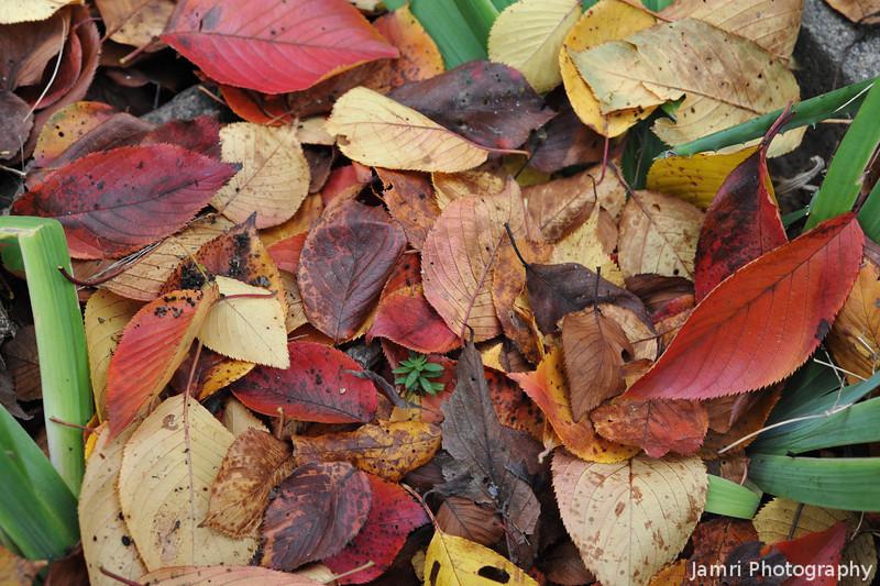 A Piece of Autumn Colour.