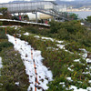 Snow on the ground.<br /> On the mountain overlooking Amanohashidate.