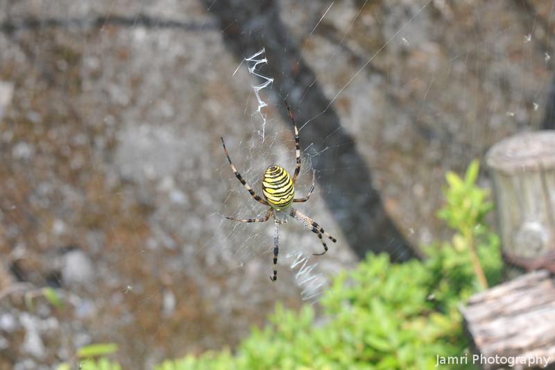 Autumn Spider.<br /> At Lake Tanuki, Shizuoka, Japan.