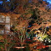 Shrine Building and Lit Up Trees.<br /> At Nagaoka Tenmangu Shrine, in Nagaokakyo.