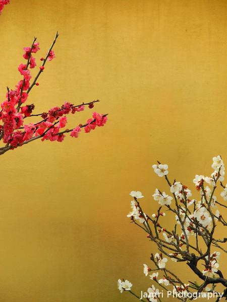 Bonsai Ume on Gold.