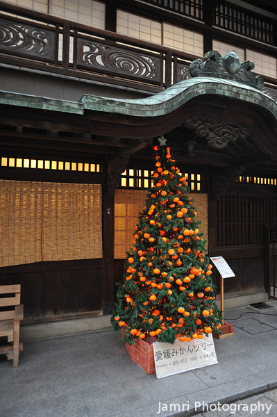 Christmas Tree with Mikans on it.<br /> Since Mikan (mandarin oranges) is one of the main products from this part of Japan, this Christmas tree is decorated with mikan looking lights.