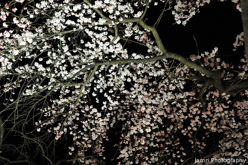 Sakura colours against the night sky.