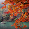 Maple Tree and Boat.<br /> At Arashiyama, Kyoto.<br /> Note Film Shot: Nikon F80 + Nikkor 35 f/2 + Fujichrome Velvia