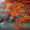 Maple Tree and Boat.<br /> At Arashiyama, Kyoto.<br /> Note Film Shot: Nikon F80 + Nikkor 35 f/2 + Fujichrome Velvia