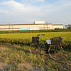 Bicycle in Front of a Rice Field.