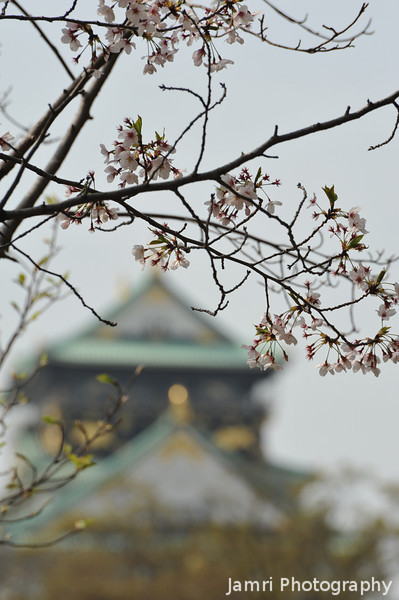 Framed with some Sakura.<br /> Osaka Castle.