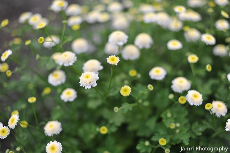 Little Yellow Flowers.