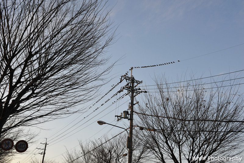Birds on the wires.