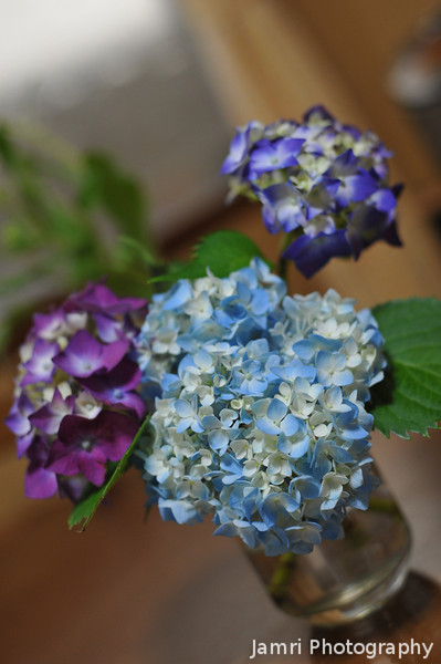 Still life of Cut Hydrangeas.<br /> One way to get rid of the rainy season creativity block!