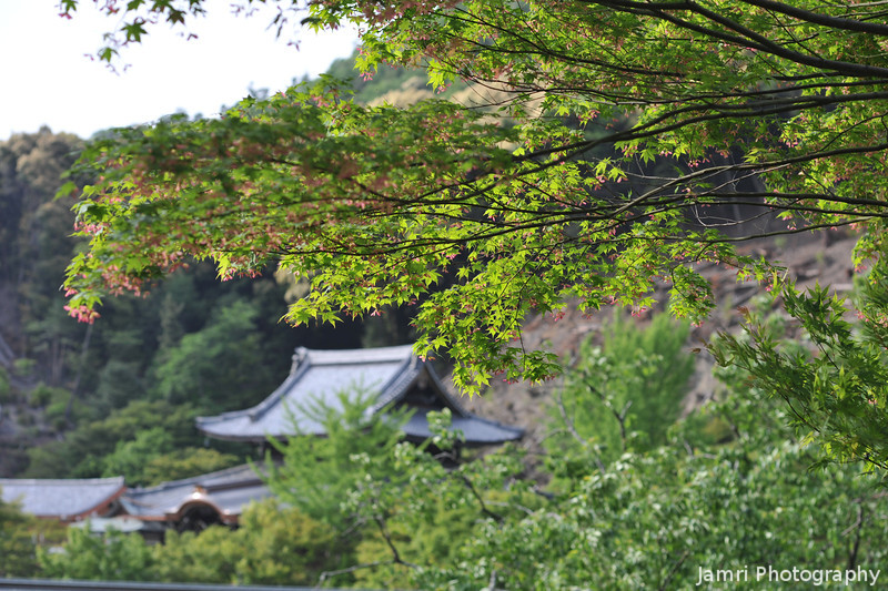 A view towards some temple buildings.<br /> At Mimuroto-ji (Mimuroto Temple) in Uji, Kyoto.