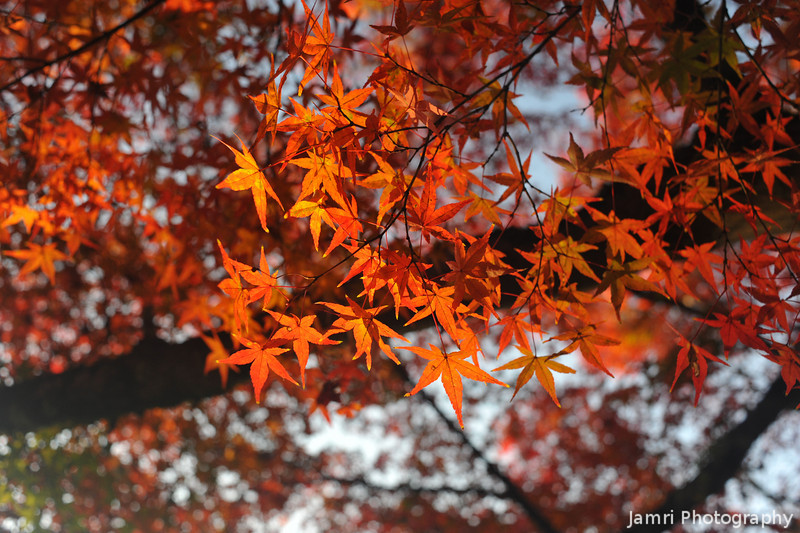 Leaves ablaze.