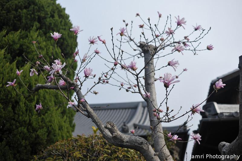 Mauve Magnolias.