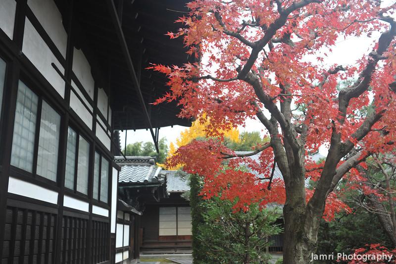 Autumn Colours in Kyoto.