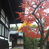 Autumn Colours in Kyoto.