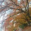 An Autumn Morning's Walk