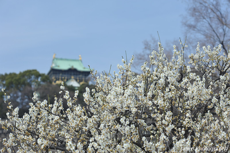 Behind the Ume.<br /> Osaka Castle.