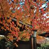Leaves in front of the front door.