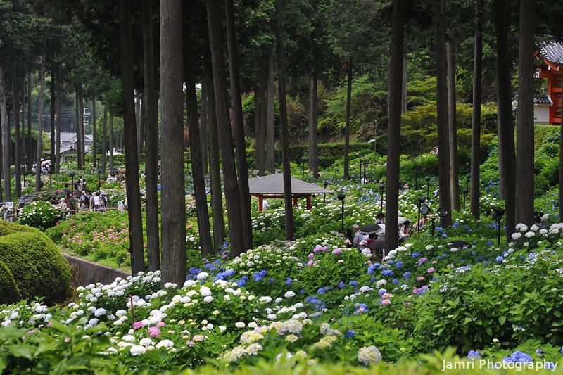 A Vast Array of Flowers.